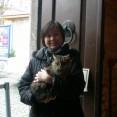 イスタンブールの野良猫と